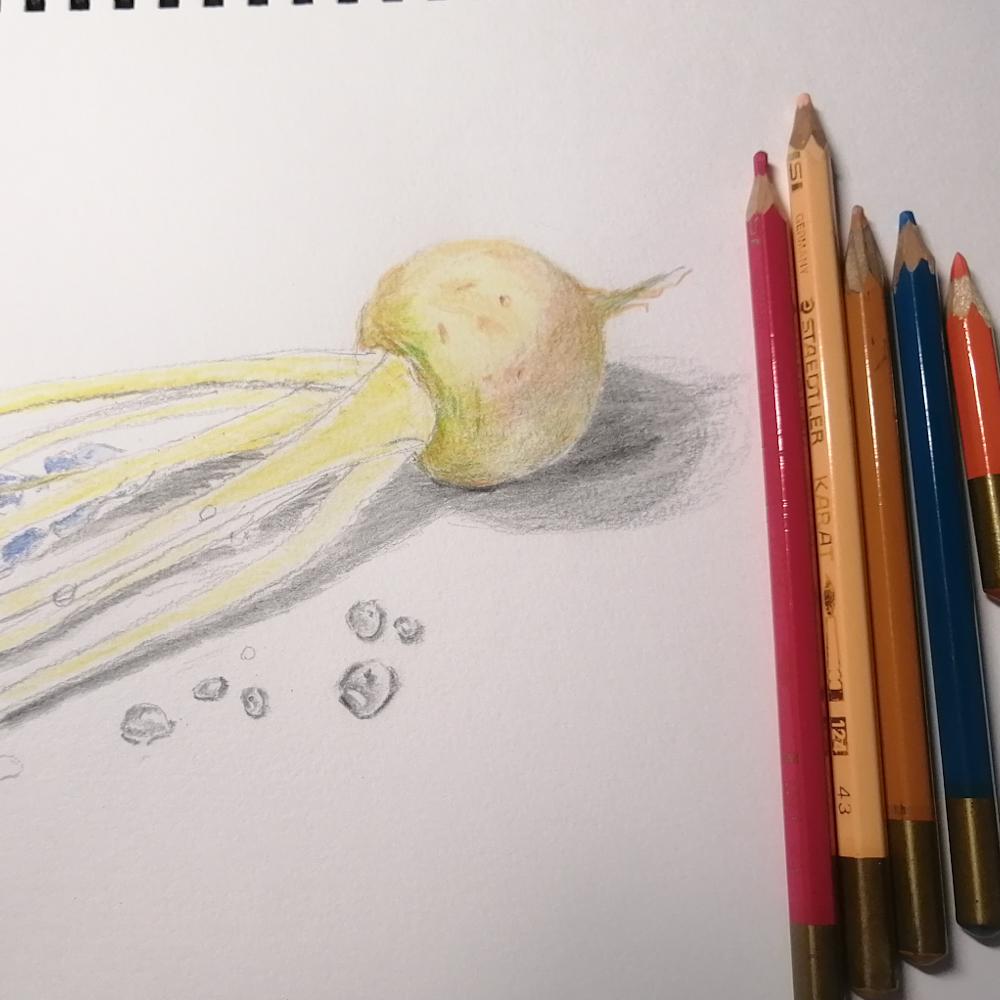色鉛筆アート‗カブ途中