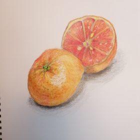 色鉛筆オレンジ完成